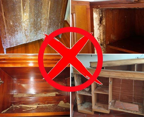 so sánh tủ gỗ dễ mối mọt